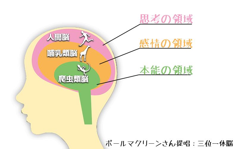三位一体脳